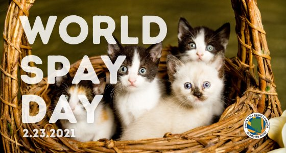 """Photo of kittens in a basket with the caption, """"World Spay Day, 2.23.2021"""""""
