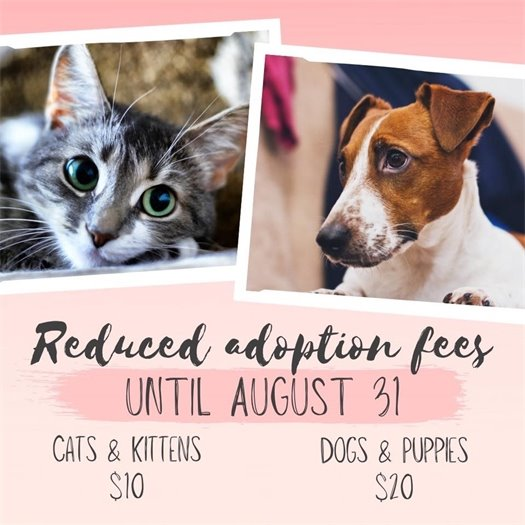 Reduced adoption fees until Aug. 31 - cats and kittens $10, dogs and puppies $20
