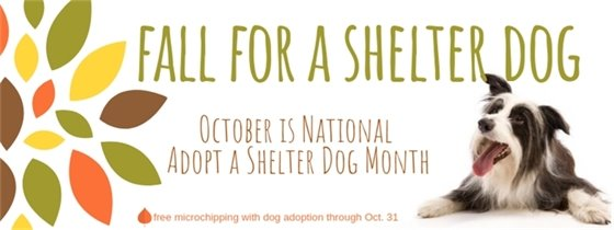 Fall for a shelter dog - free microchipping for dogs adopted through October 31
