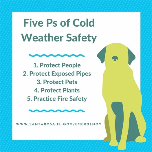 Protect people, pipes, pets, plants and practice fire safety