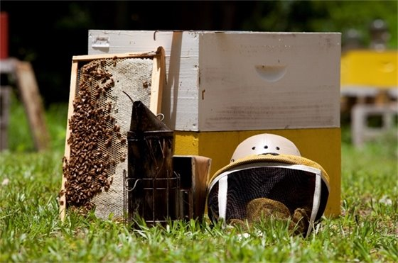 Beekeeping Basics class to be taught by Extension Services