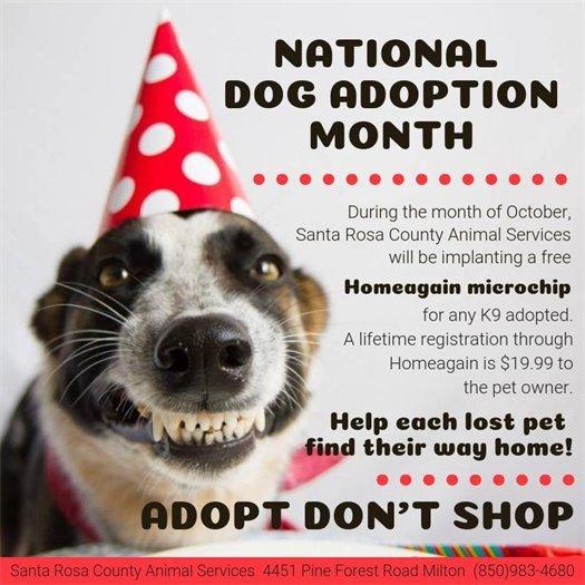 National Dog Adoption Month - October 2018