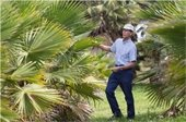 Man inspecting palm trees