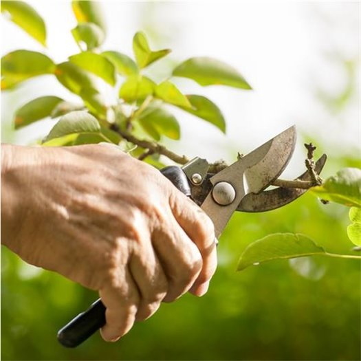 Learn to prune with the master gardeners