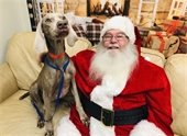 Photo of Dog with Santa Claus