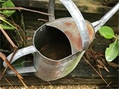 Watering can standing water