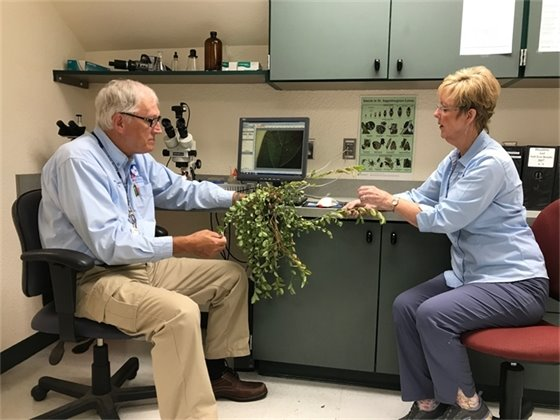 Master gardener volunteers Mike Burba and Suzanne Spencer in the north plant clinic