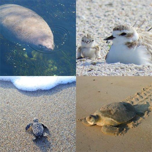 Photos of manatees, shorebirds and turtles