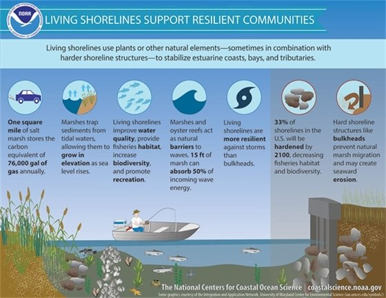 Living Shorelines Support Resilient Communities graphic