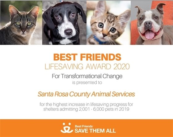 Best Friends Lifesaving Award 2020 for Transformational Change is presented to Santa Rosa County Animal Services for the highest increase in lifesaving progress for shelter admitting 2,001 - 6,000 pets in 2019