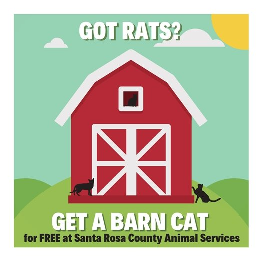 Got rats? Get a barn cat! Free at Santa Rosa County Animal Services