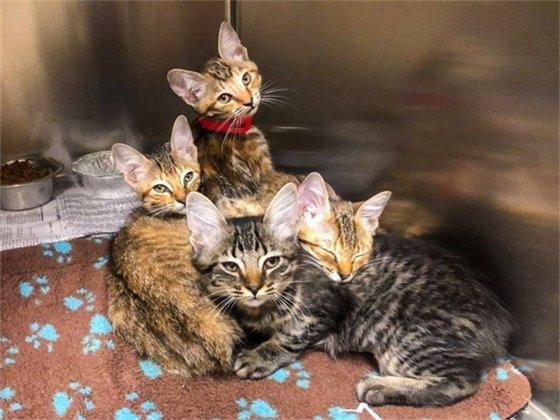 Cats and kittens up for adoption at the Santa Rosa Animal Shelter