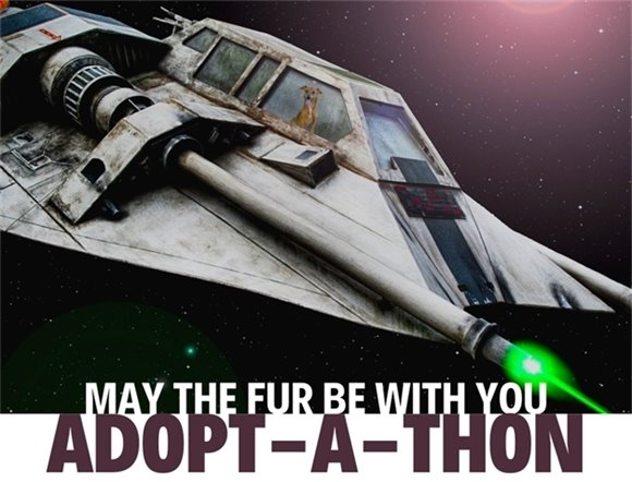"""May the fur be with you"" Adopt-a-thon graphic."