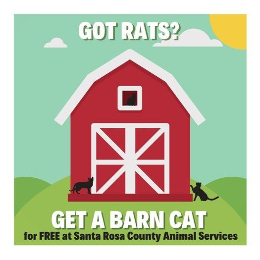 Got Rats - get a barn cat