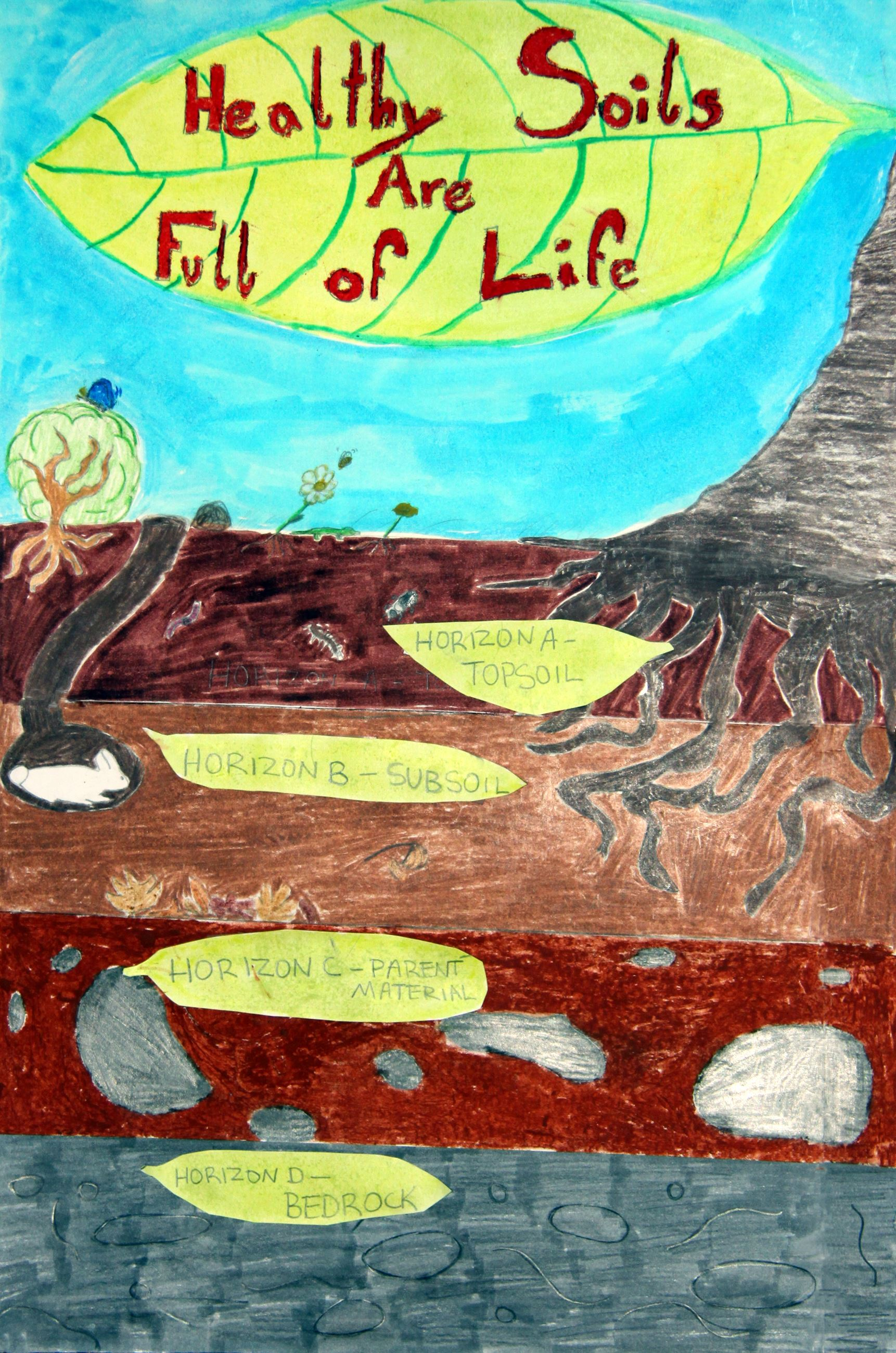 Grade 7 to 9, First Place Winner: Abigail Driskell